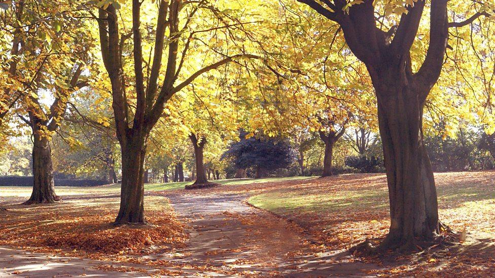 Hình ảnh mùa thu nắng vàng