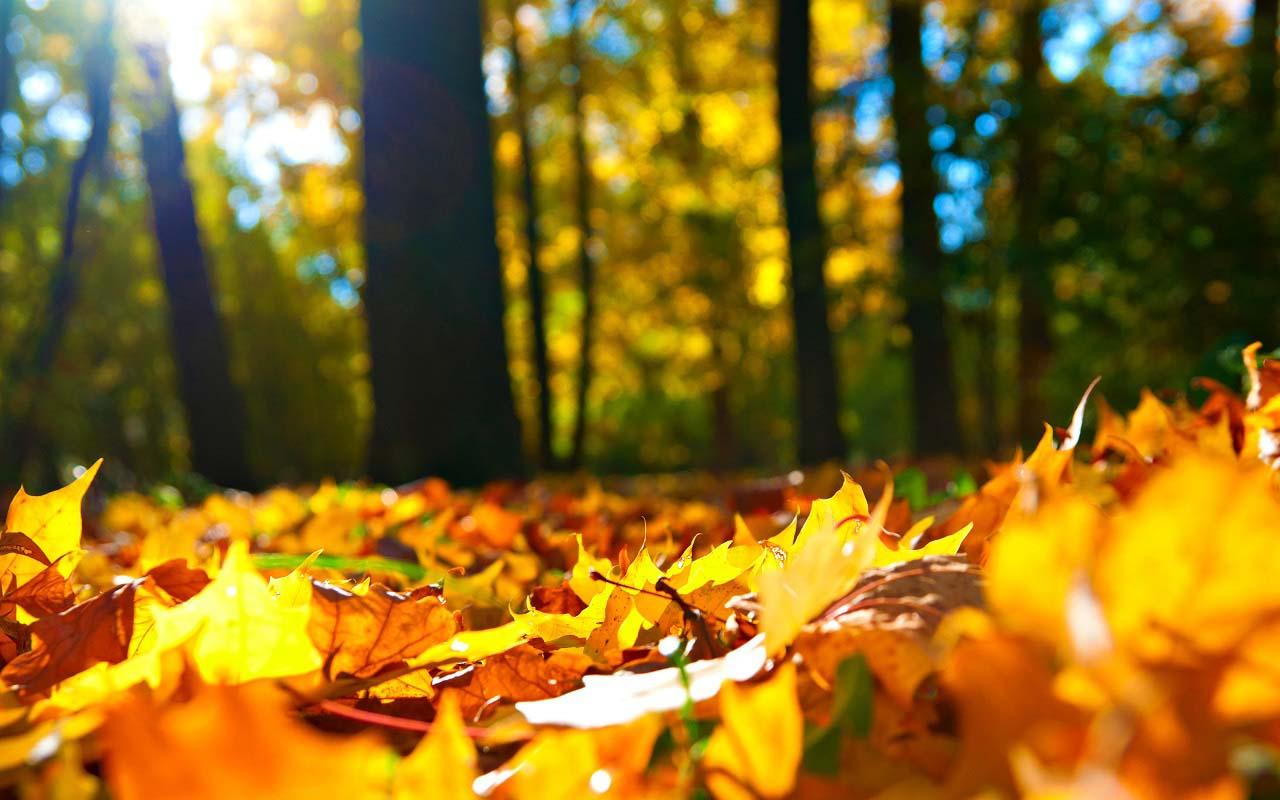 Hình ảnh mùa thu rực rỡ