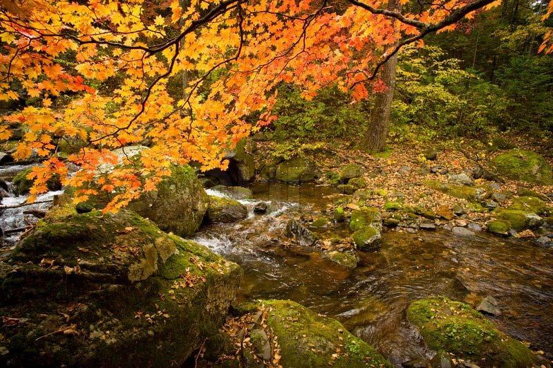 Hình ảnh mùa thu trong rừng