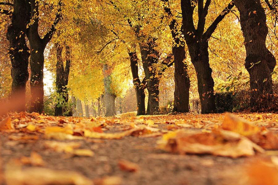 Hình ảnh mùa thu vàng đẹp