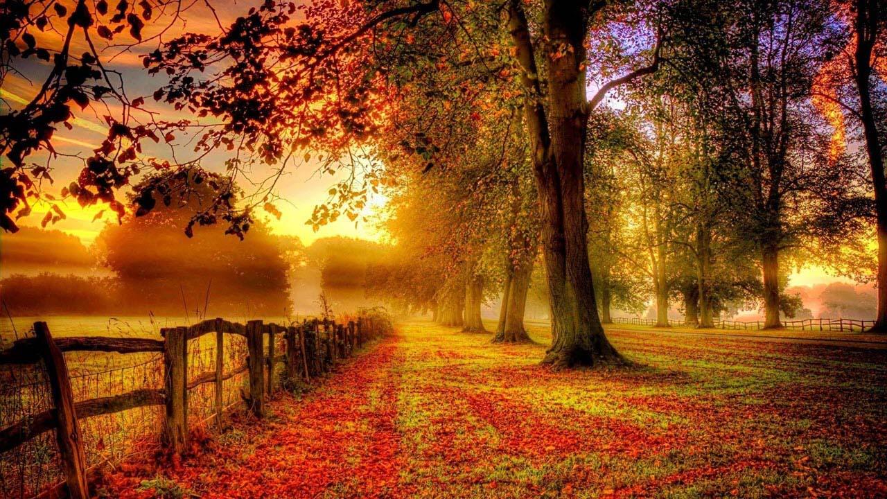 Hình ảnh mùa thu vàng
