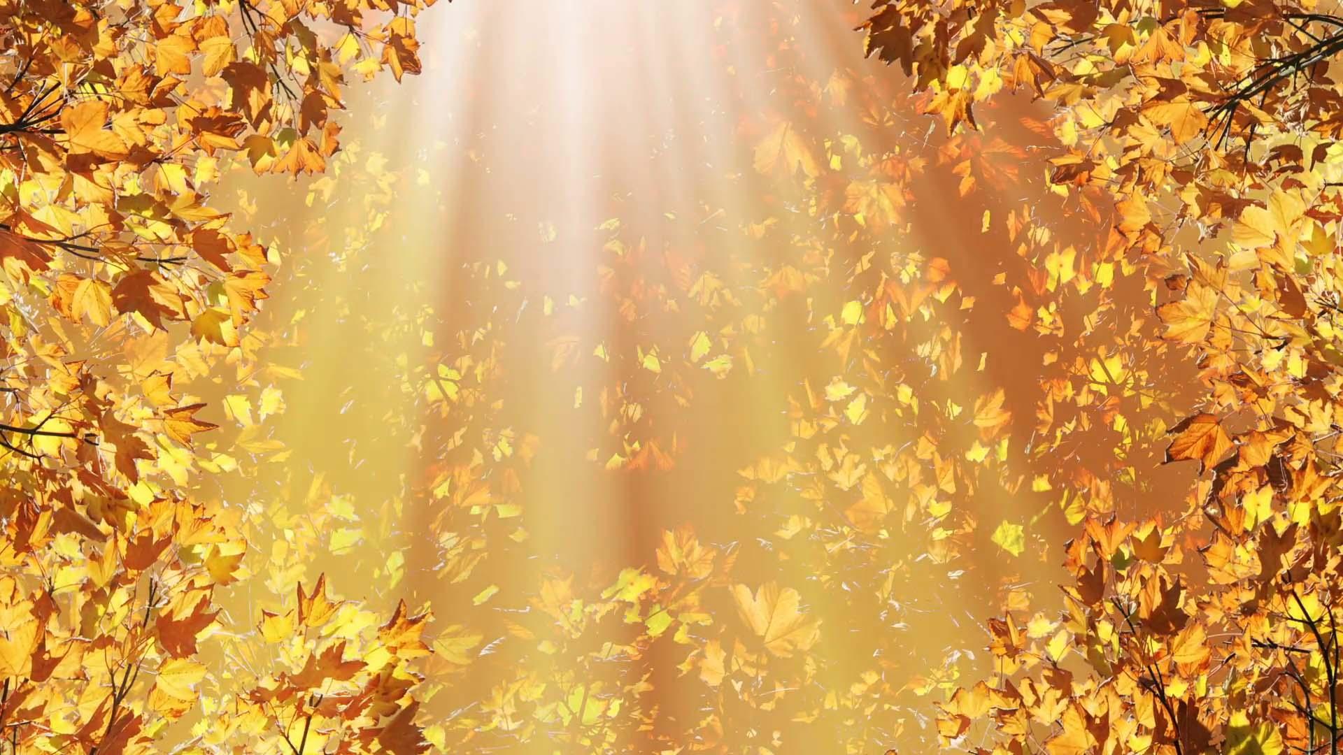 Hình ảnh nắng mùa thu đẹp