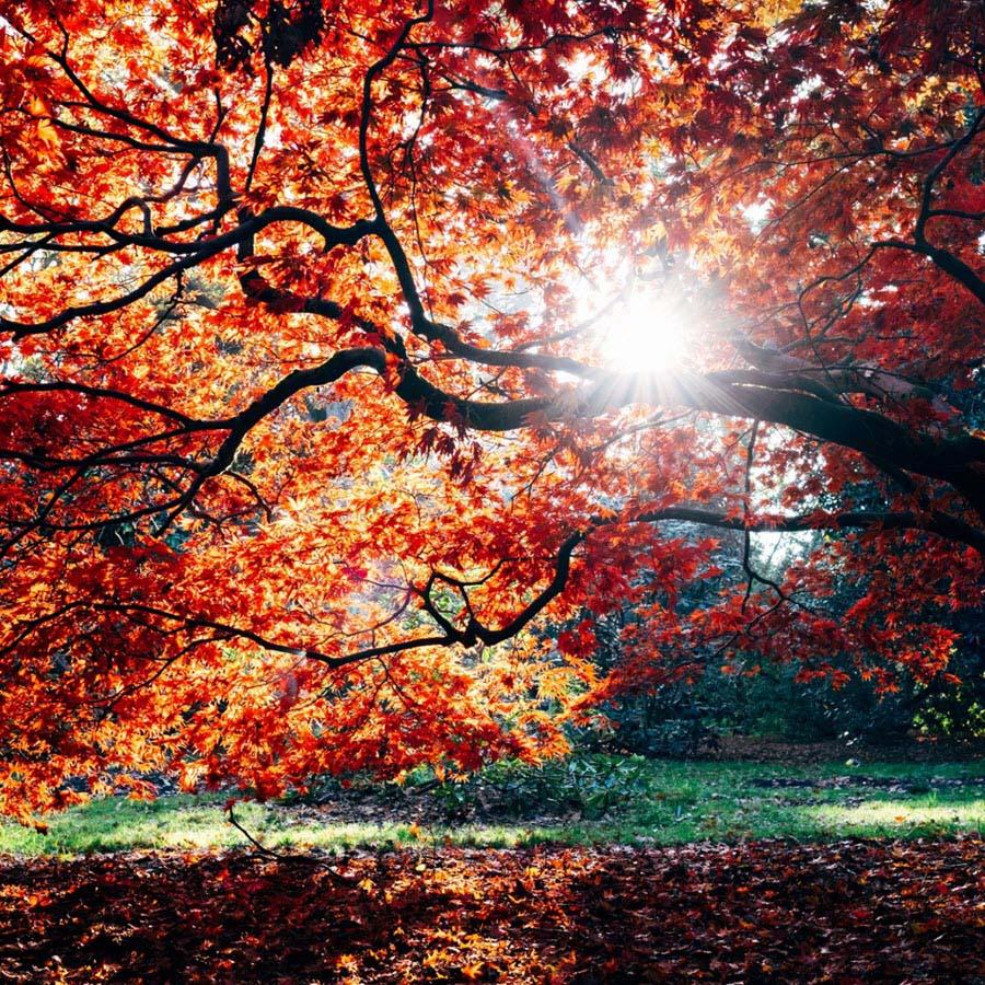 Hình ảnh nắng mùa thu