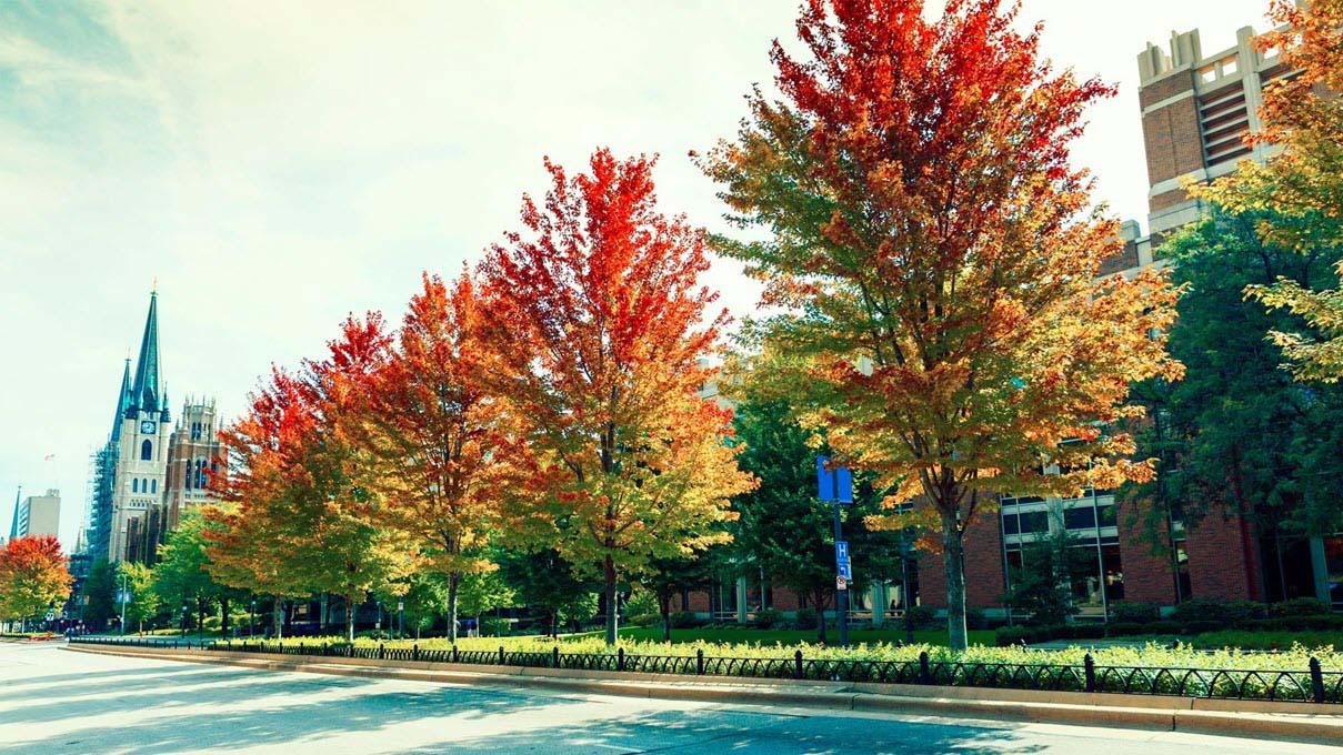 Hình ảnh phố mùa thu