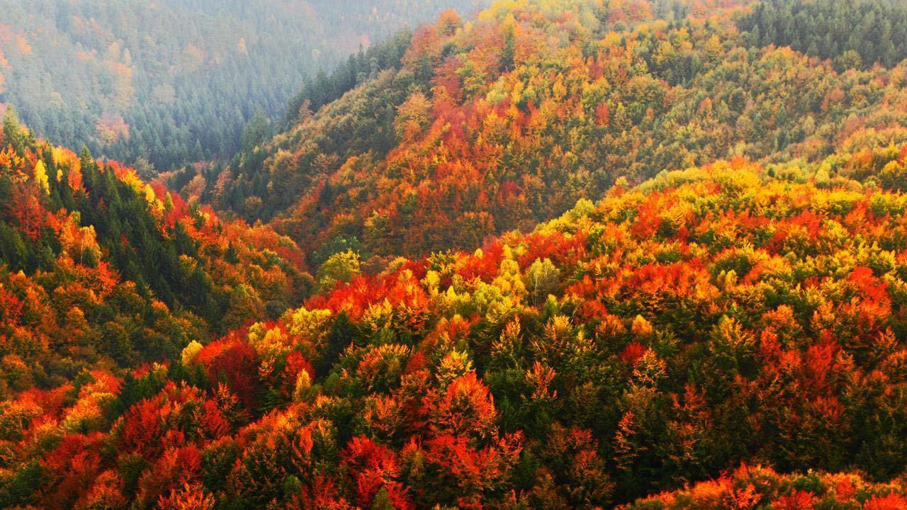 Hình ảnh rừng cây mùa thu