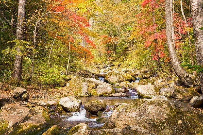 Hình ảnh thiên nhiên mùa thu đẹp