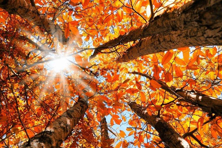 Hình ảnh thiên nhiên mùa thu