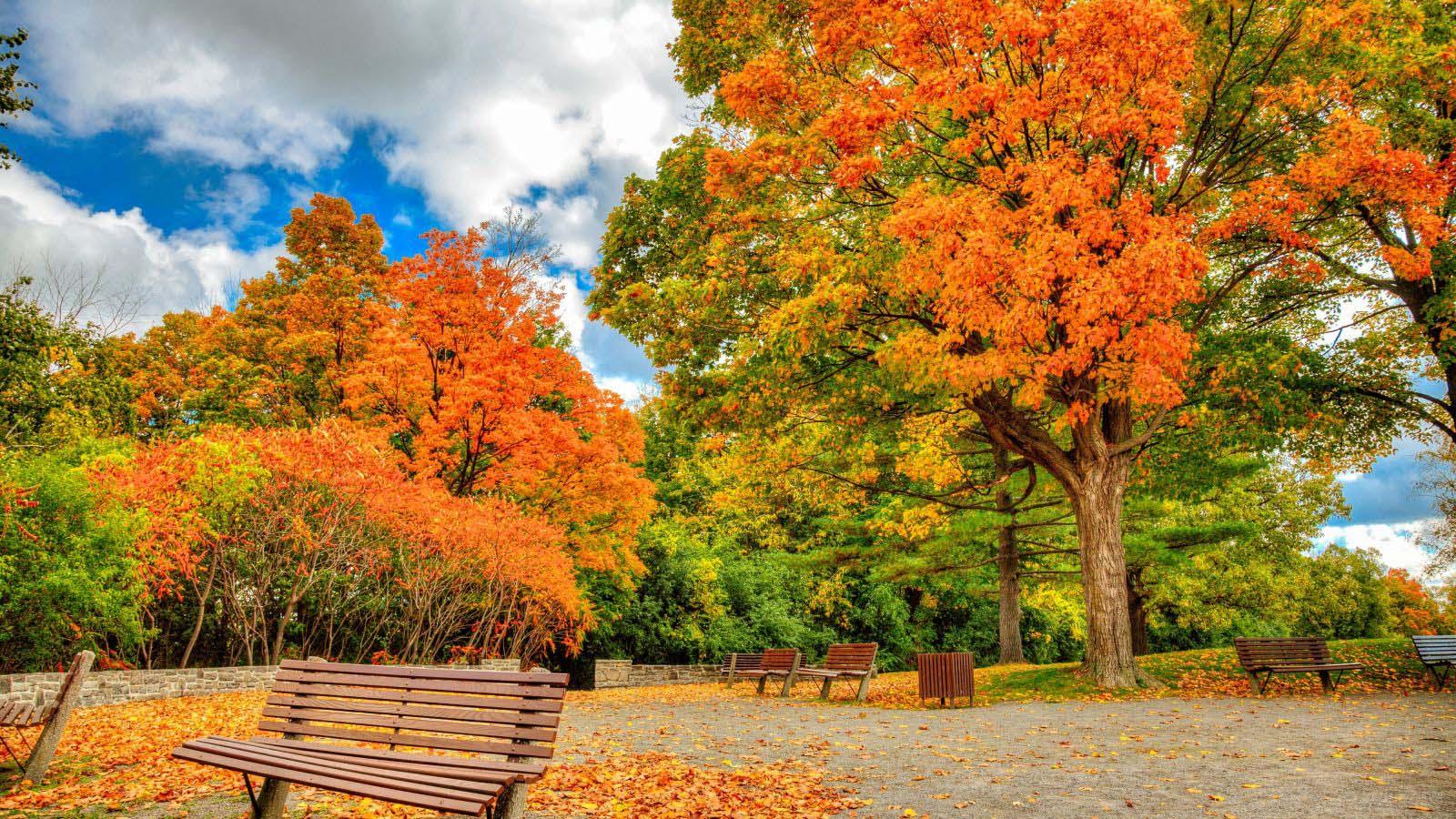 Những ảnh đẹp về mùa thu
