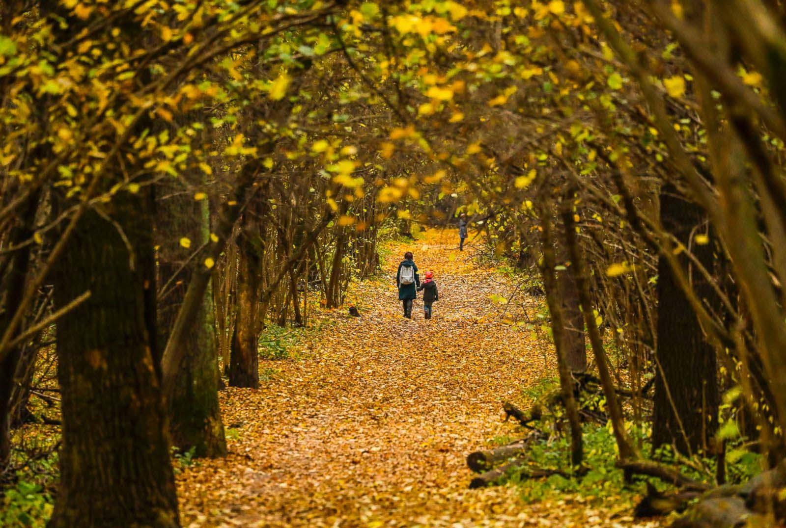 Những hình ảnh đẹp về mùa thu