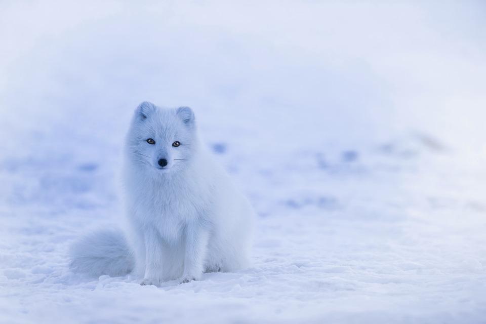 Hình ảnh động vật vào mùa đông