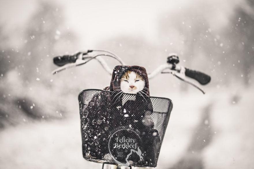 Hình ảnh mùa đông ấm áp