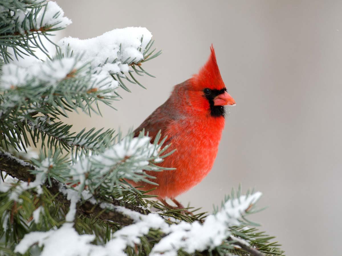 Hình ảnh mùa đông đẹp nhất