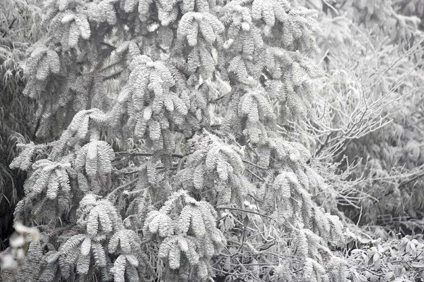 Hình ảnh tuyết trắng mùa đông