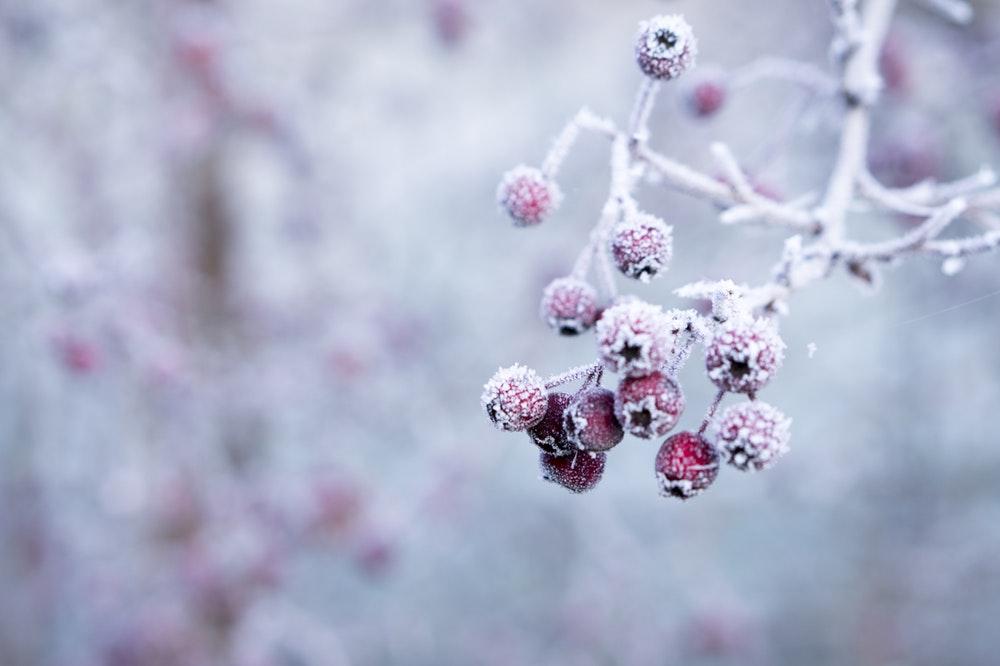 Hình ảnh về mùa đông