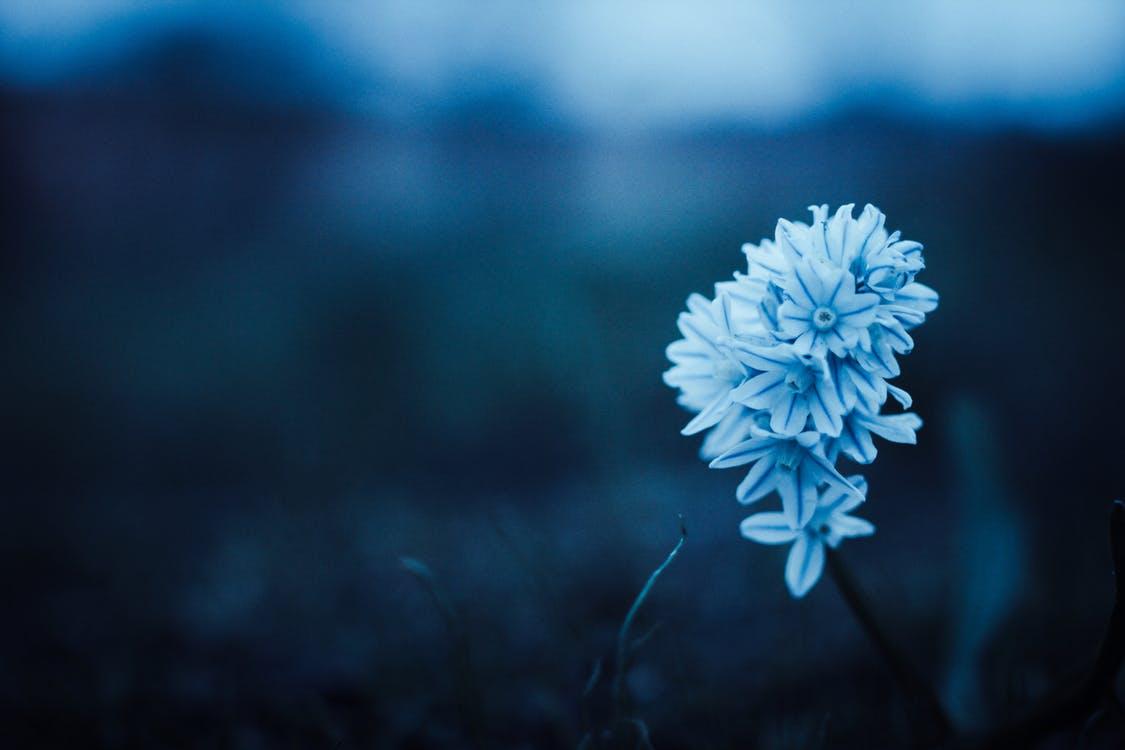 Ảnh nền hoa màu xanh