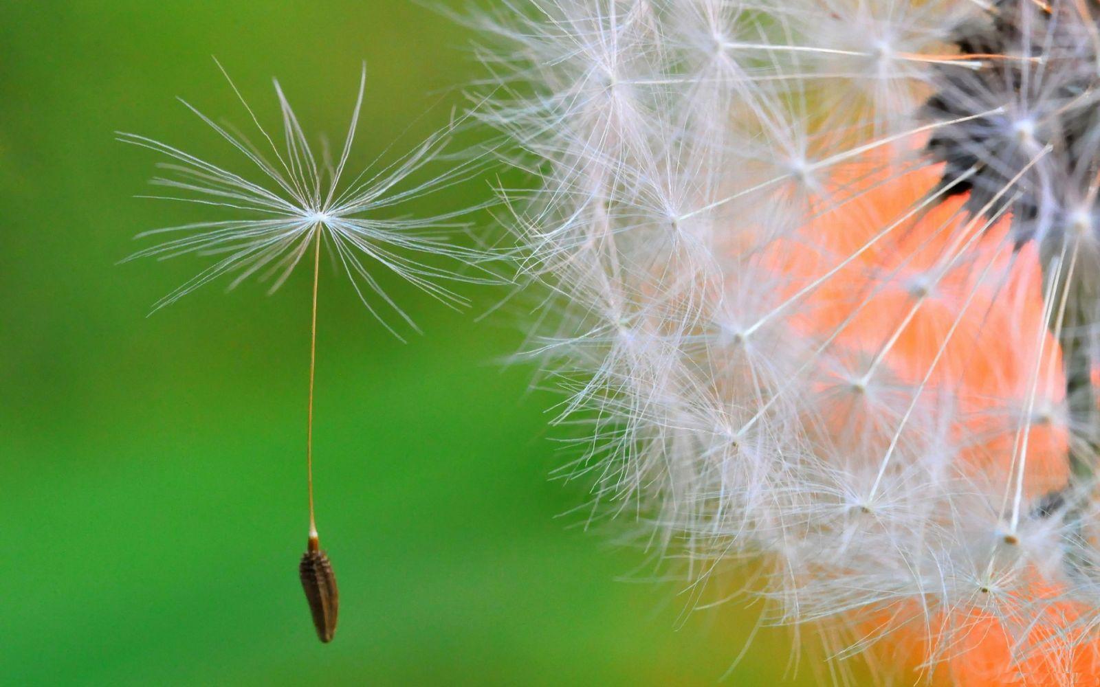 Hình nền hoa màu xanh đẹp