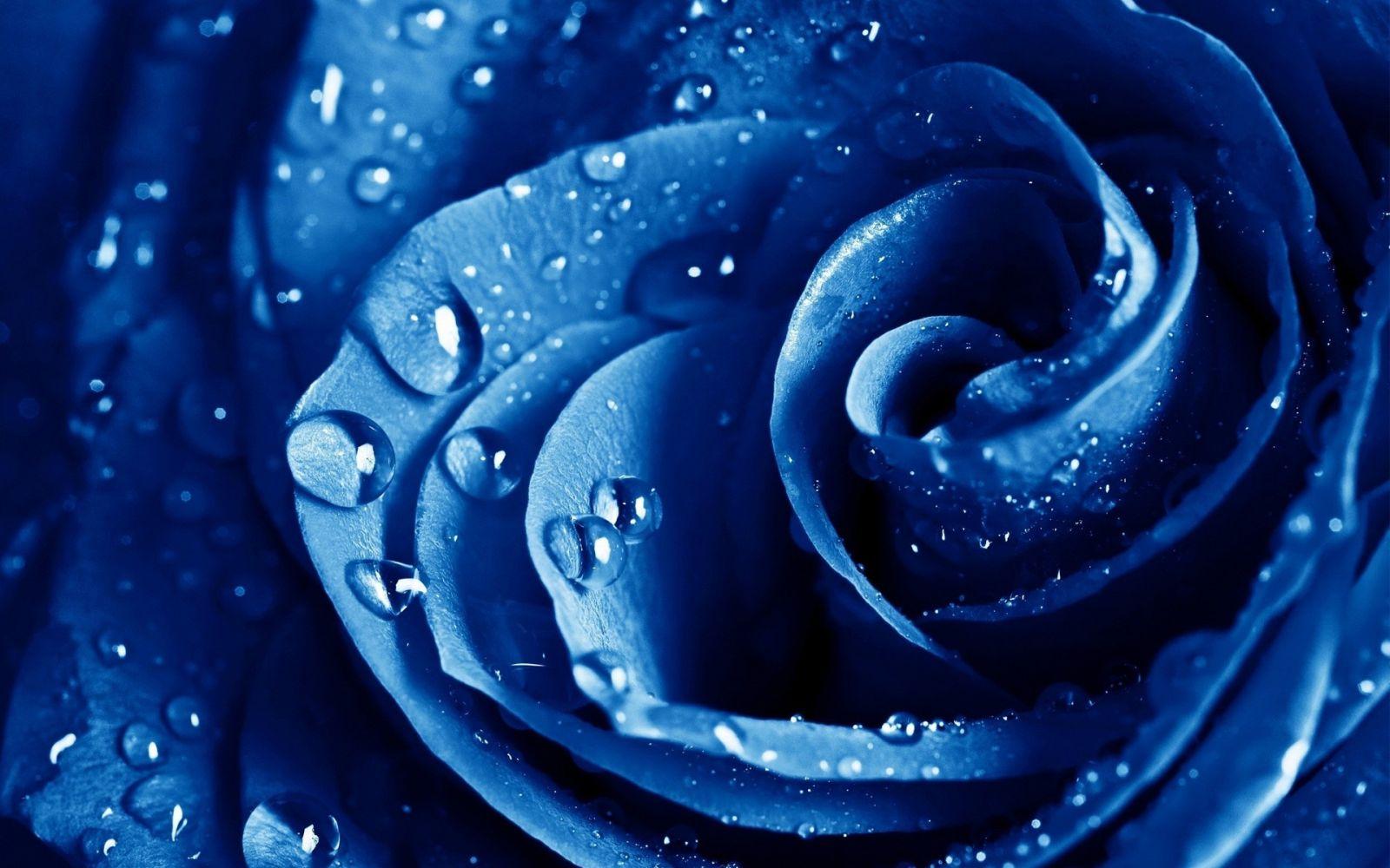Hình nền hoa màu xanh