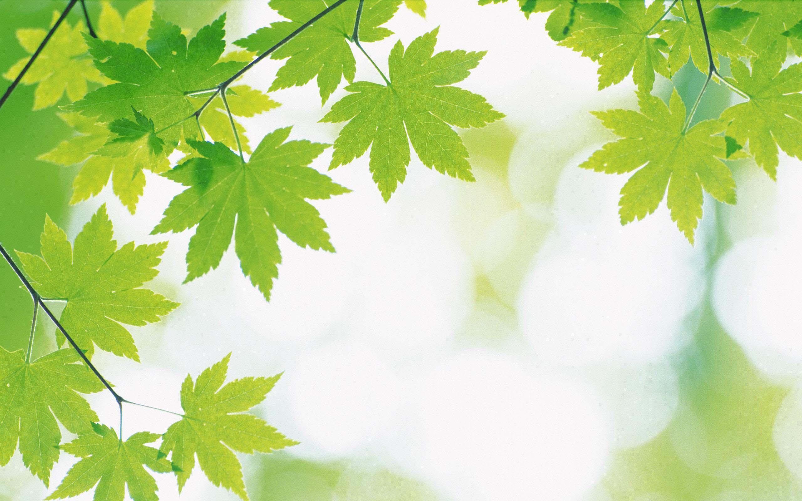 Hình nền màu xanh lá cây đẹp