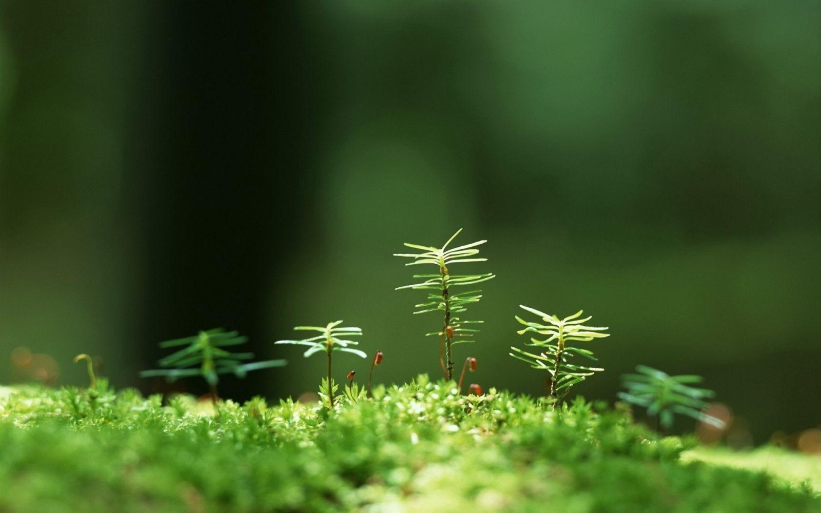 Hình nền thực vật màu xanh