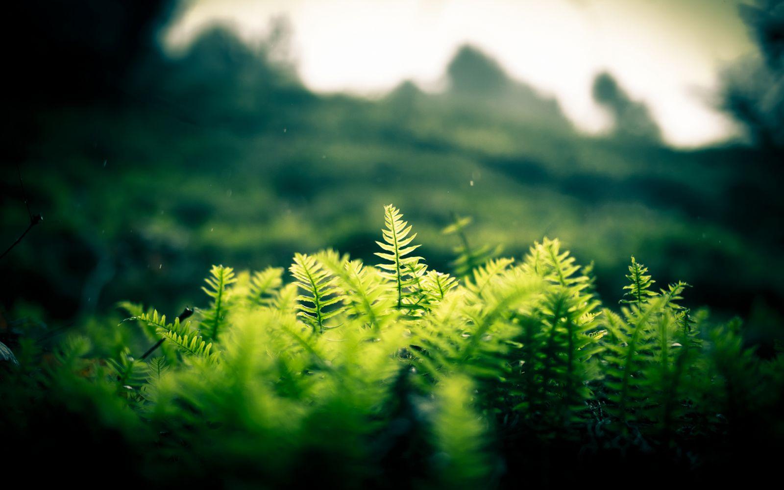 Hình nền xanh lá thiên nhiên